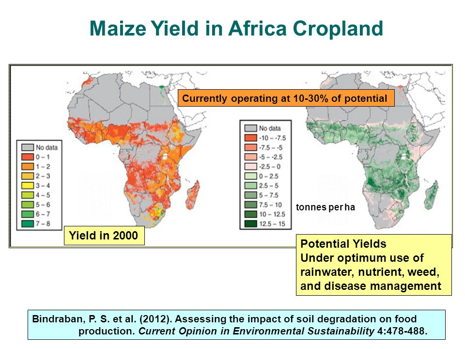 Maize Yield in Africa Cropland
