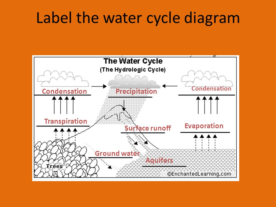 Label the water cycle diagram