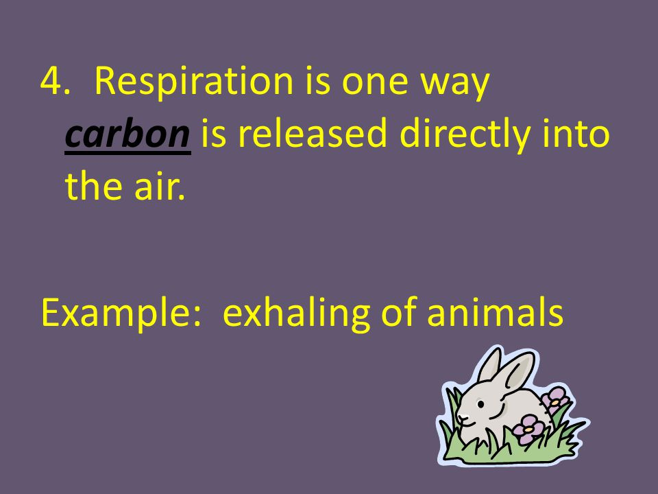 4. Respiration is one way carbon is released directly into the air