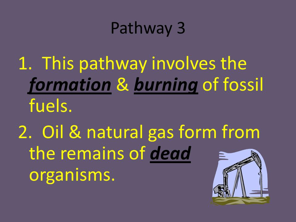 Pathway 3 1. This pathway involves the formation & burning of fossil fuels.