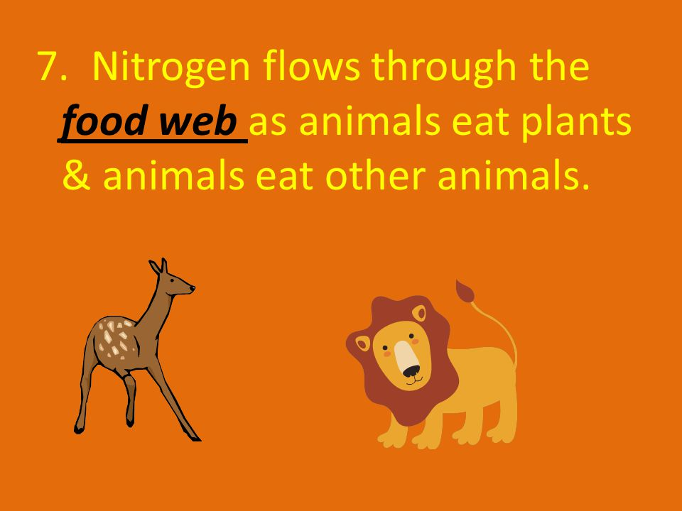 7. Nitrogen flows through the food web as animals eat plants & animals eat other animals.