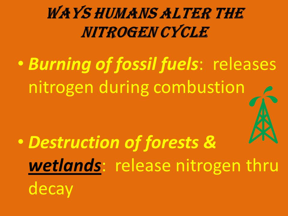 WAYS HUMANS ALTER THE NITROGEN CYCLE