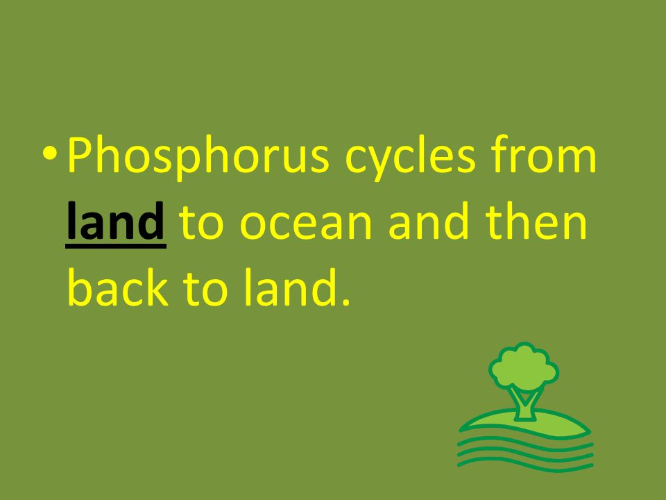 Phosphorus cycles from land to ocean and then back to land.