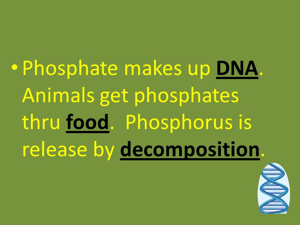 Phosphate makes up DNA. Animals get phosphates thru food