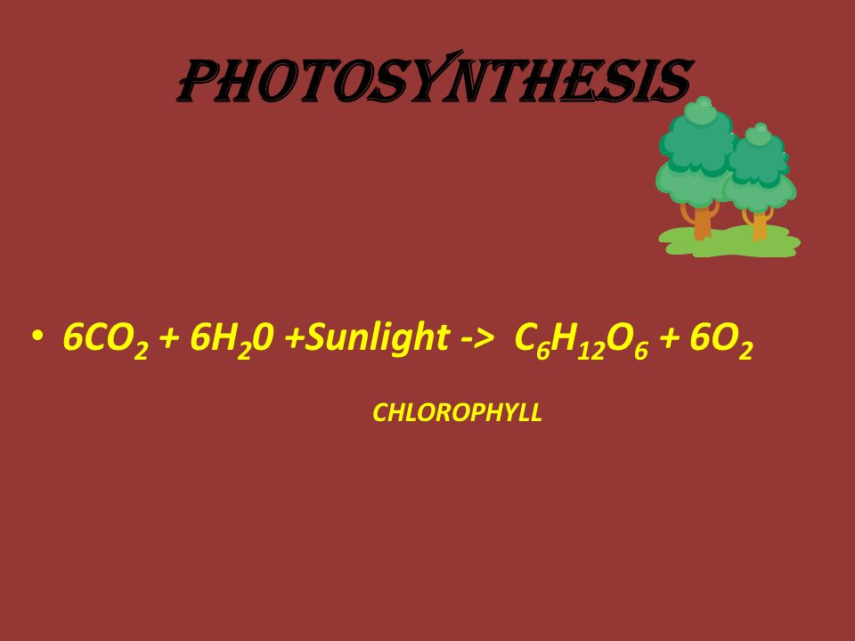 Photosynthesis 6CO2 + 6H20 +Sunlight -> C6H12O6 + 6O2 CHLOROPHYLL