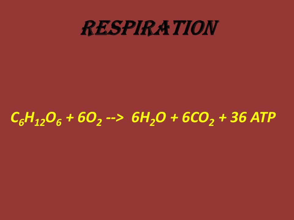 Respiration C6H12O6 + 6O2 --> 6H2O + 6CO2 + 36 ATP