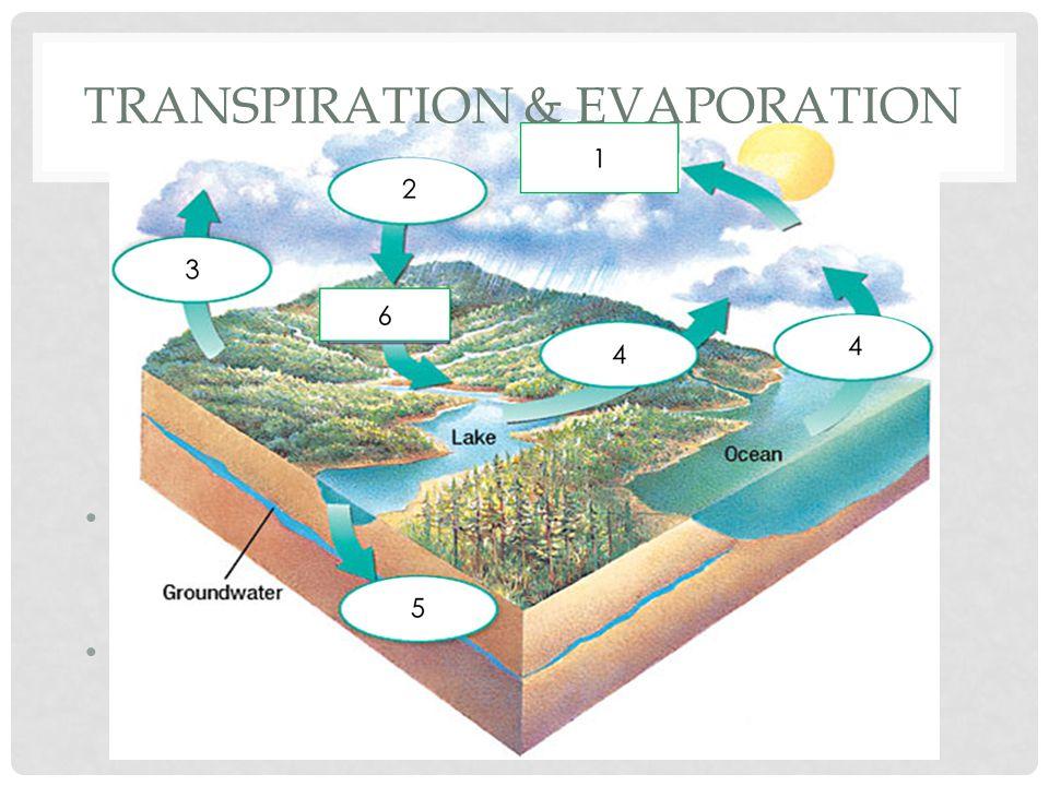 Transpiration & EVAPORATION