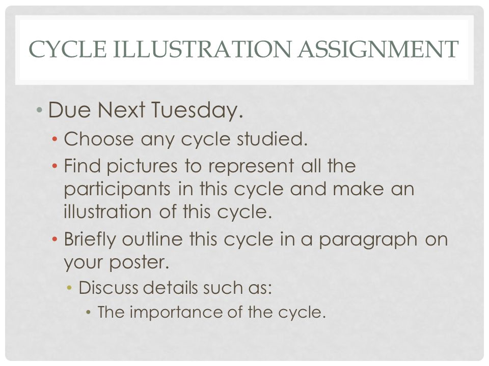 Cycle illustration Assignment