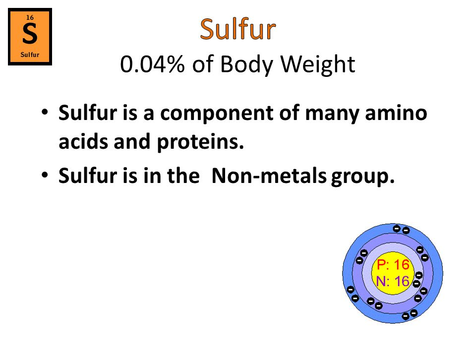 Sulfur 0.04% of Body Weight Sulfur is a component of many amino acids and proteins.