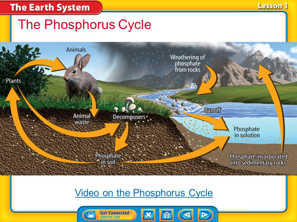 The Phosphorus Cycle Video on the Phosphorus Cycle Lesson 1-2 28