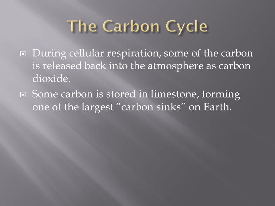 The Carbon Cycle During cellular respiration, some of the carbon is released back into the atmosphere as carbon dioxide.