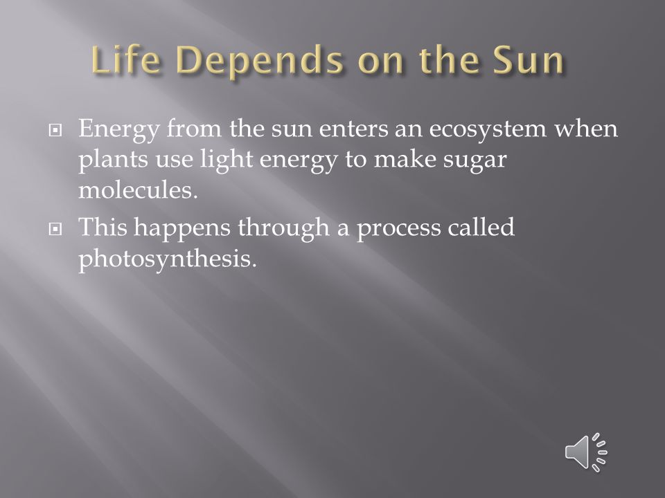 Life Depends on the Sun Energy from the sun enters an ecosystem when plants use light energy to make sugar molecules.