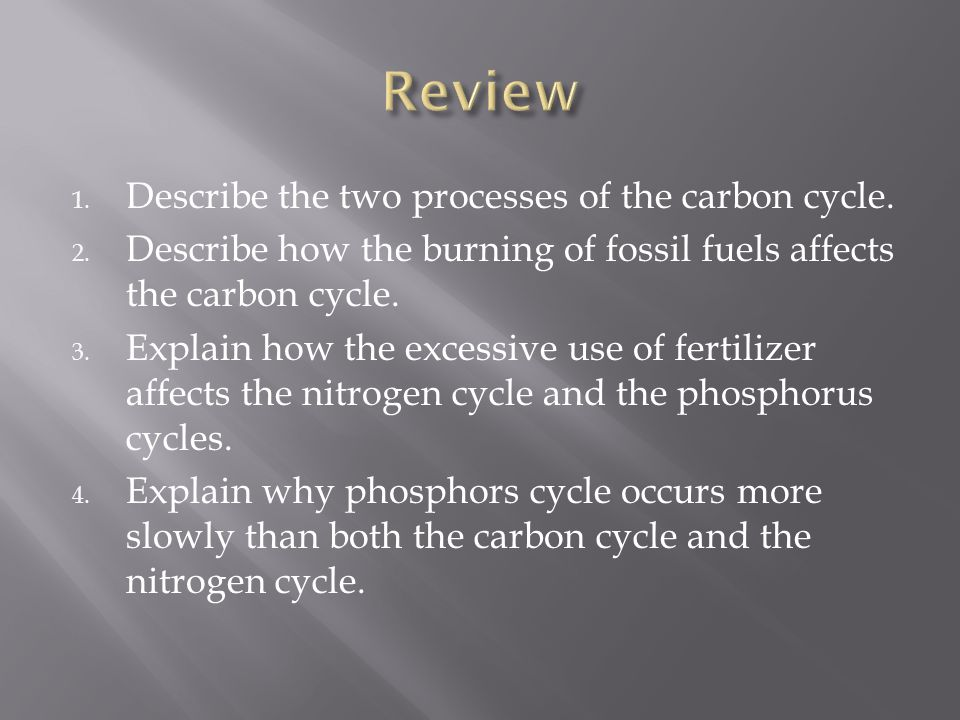 Review Describe the two processes of the carbon cycle.