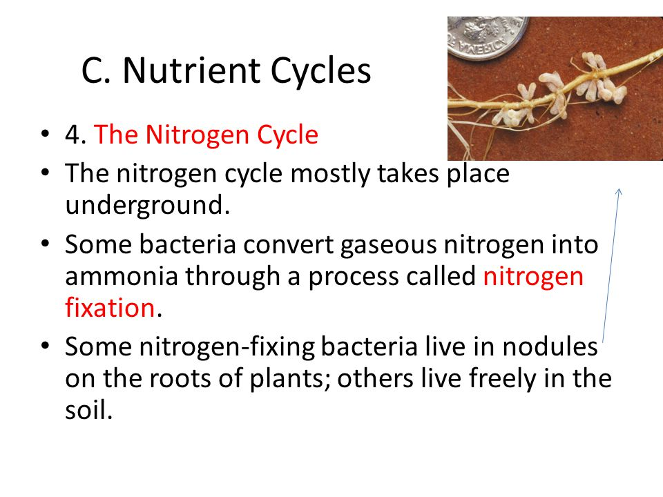 C. Nutrient Cycles 4. The Nitrogen Cycle