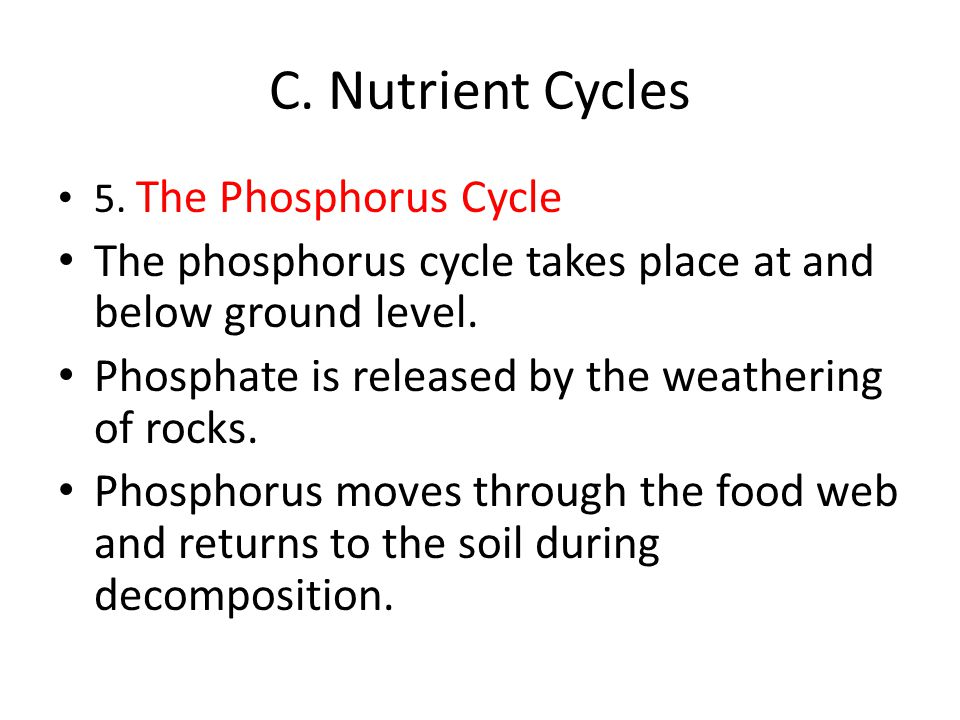 C. Nutrient Cycles 5. The Phosphorus Cycle. The phosphorus cycle takes place at and below ground level.