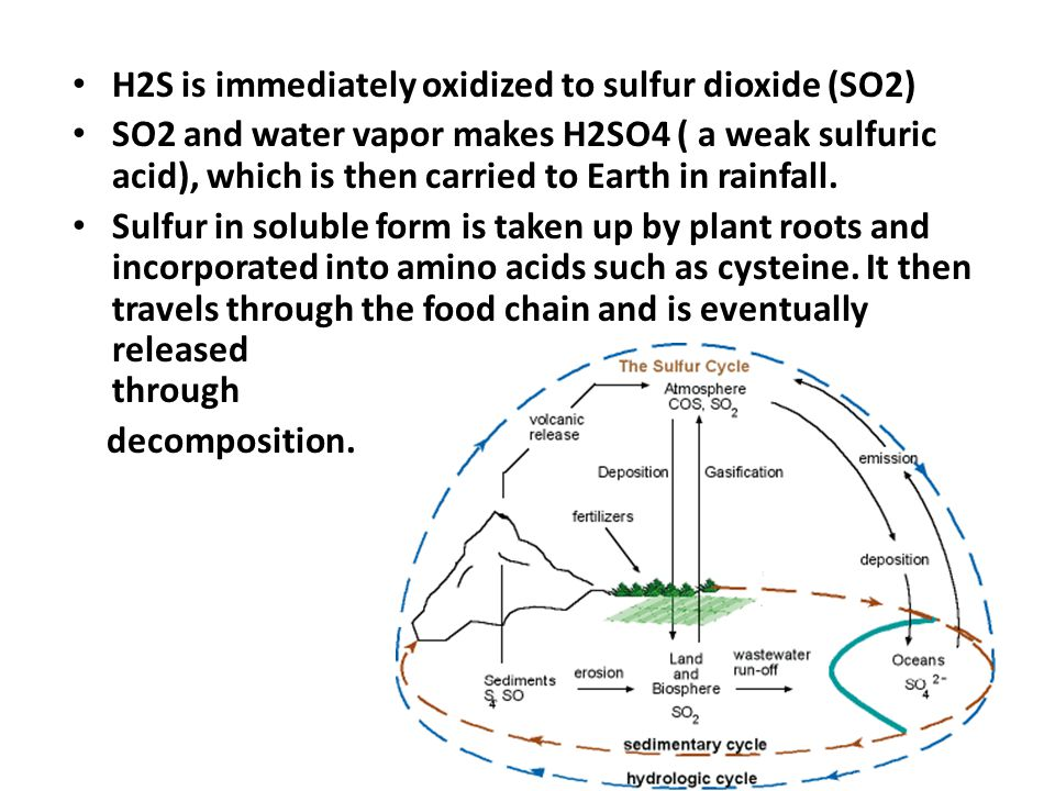 H2S is immediately oxidized to sulfur dioxide (SO2)