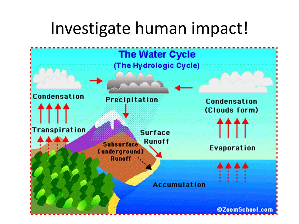 Investigate human impact!