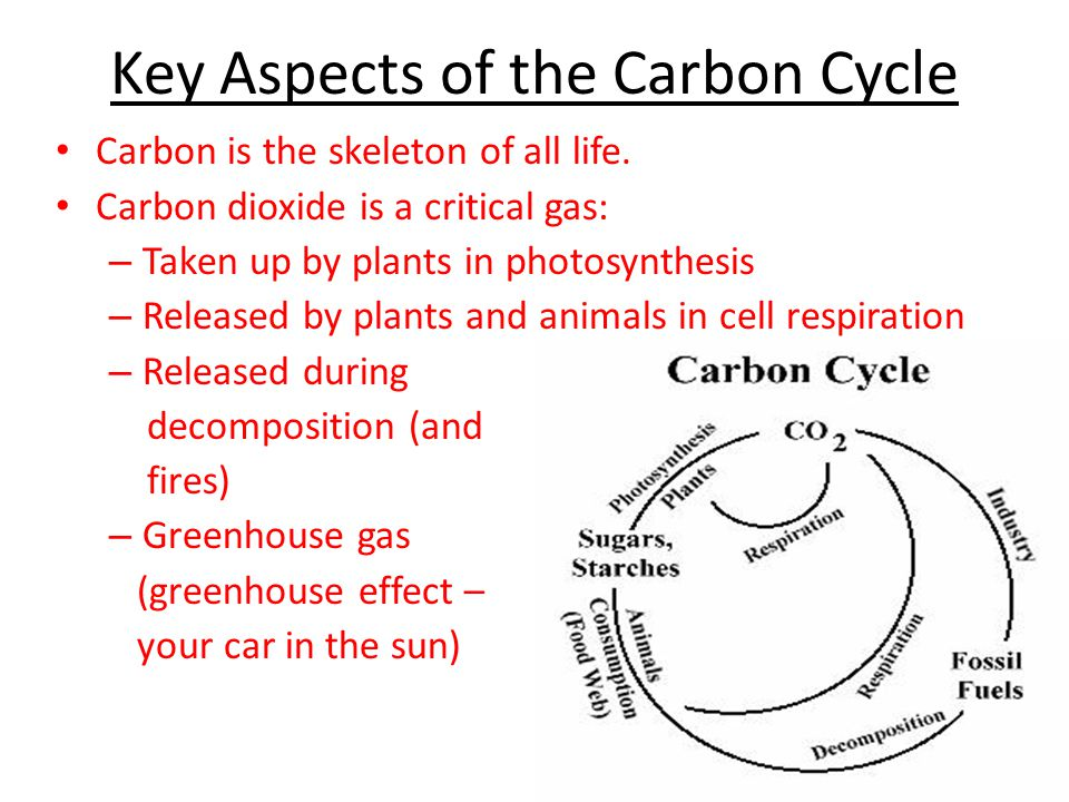 Key Aspects of the Carbon Cycle