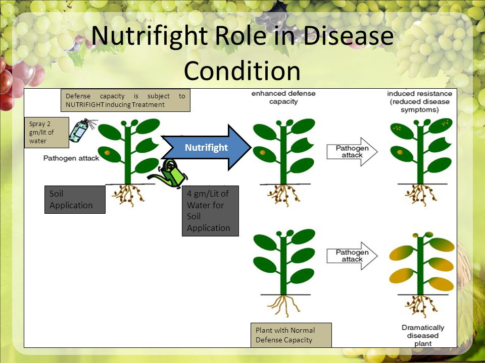 Nutrifight Role in Disease Condition