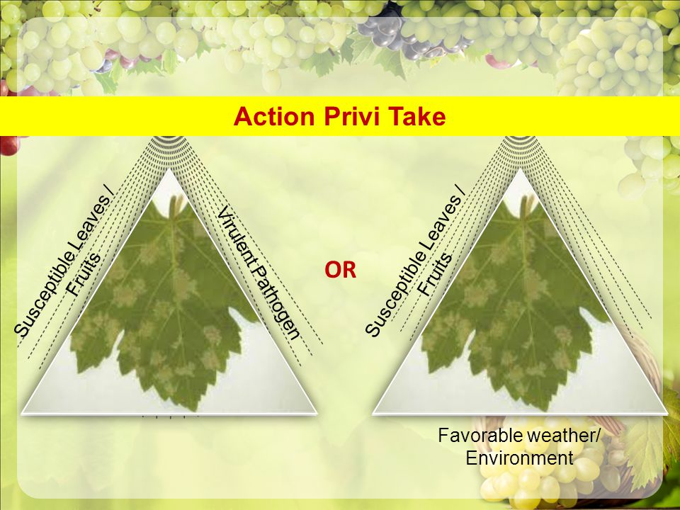 Action Privi Take OR Susceptible Leaves / Fruits