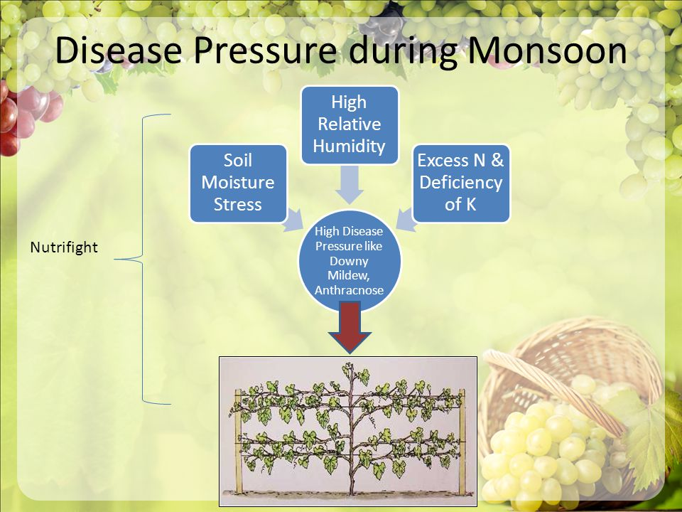 Disease Pressure during Monsoon