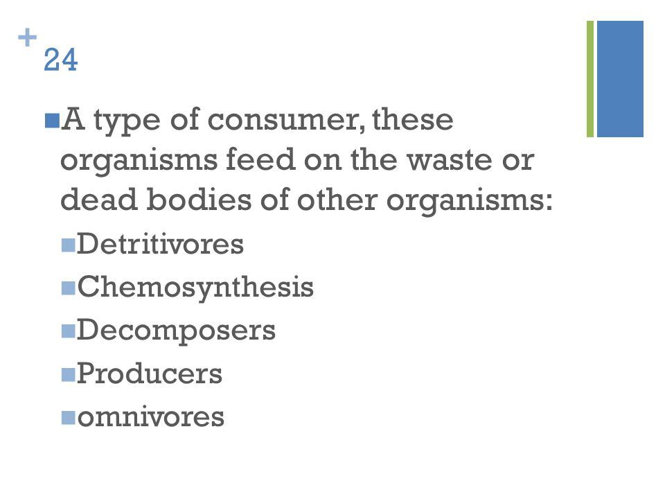 24 A type of consumer, these organisms feed on the waste or dead bodies of other organisms: Detritivores.