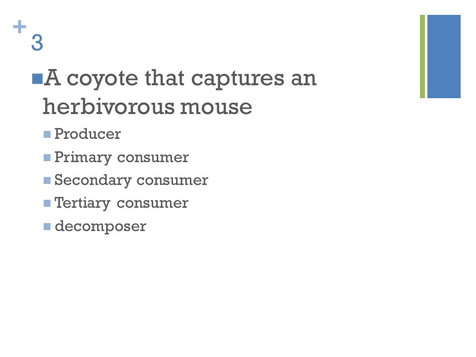 A coyote that captures an herbivorous mouse