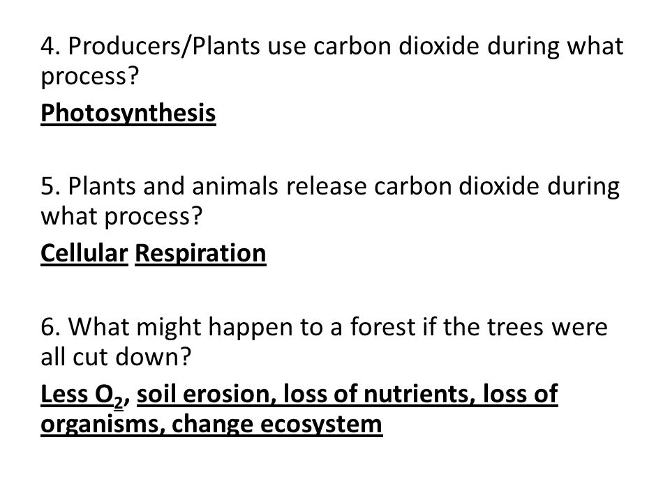 4. Producers/Plants use carbon dioxide during what process