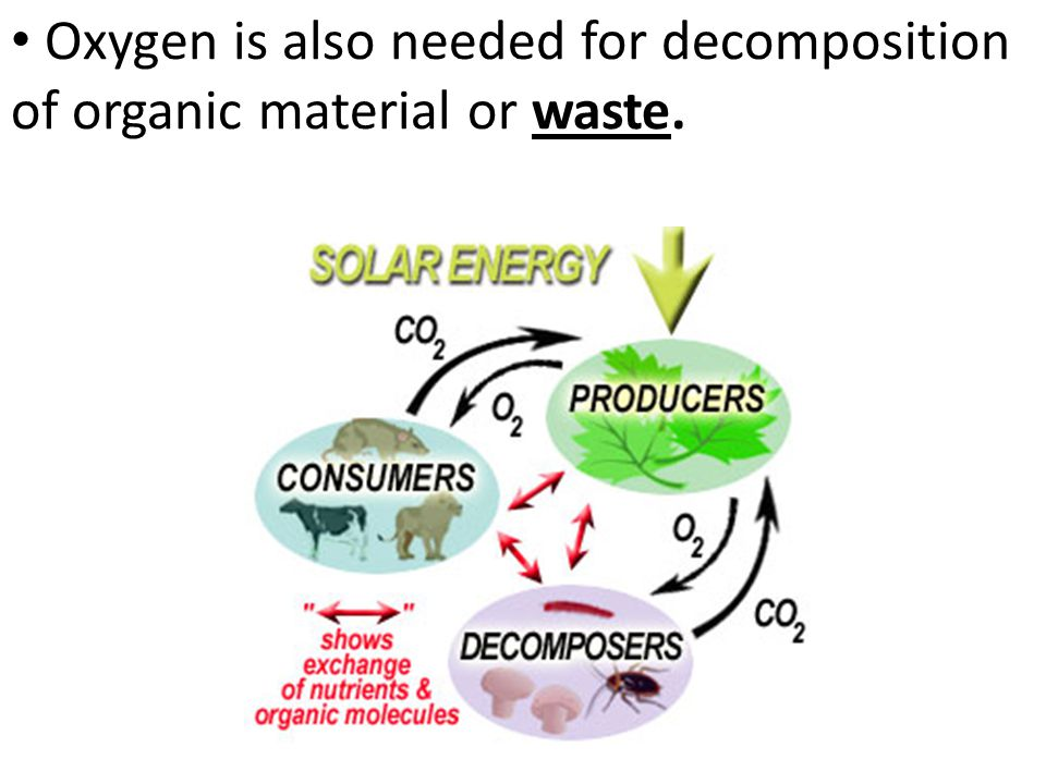 Oxygen is also needed for decomposition of organic material or waste.