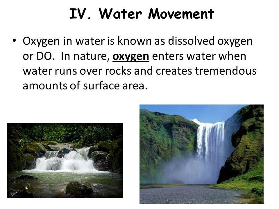 IV. Water Movement