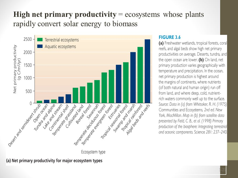 High net primary productivity = ecosystems whose plants rapidly convert solar energy to biomass