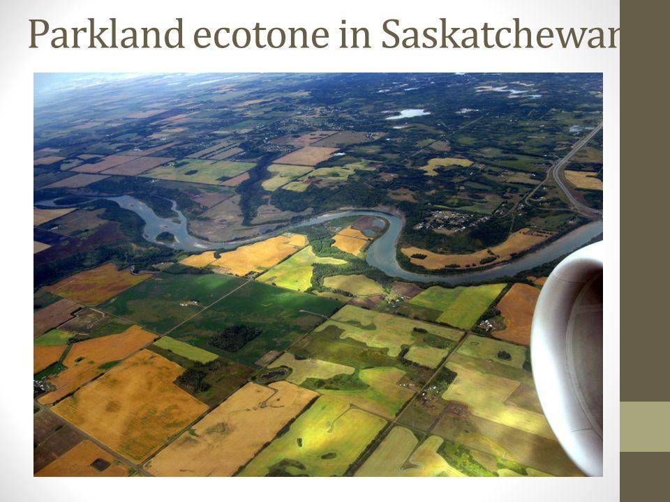 Parkland ecotone in Saskatchewan