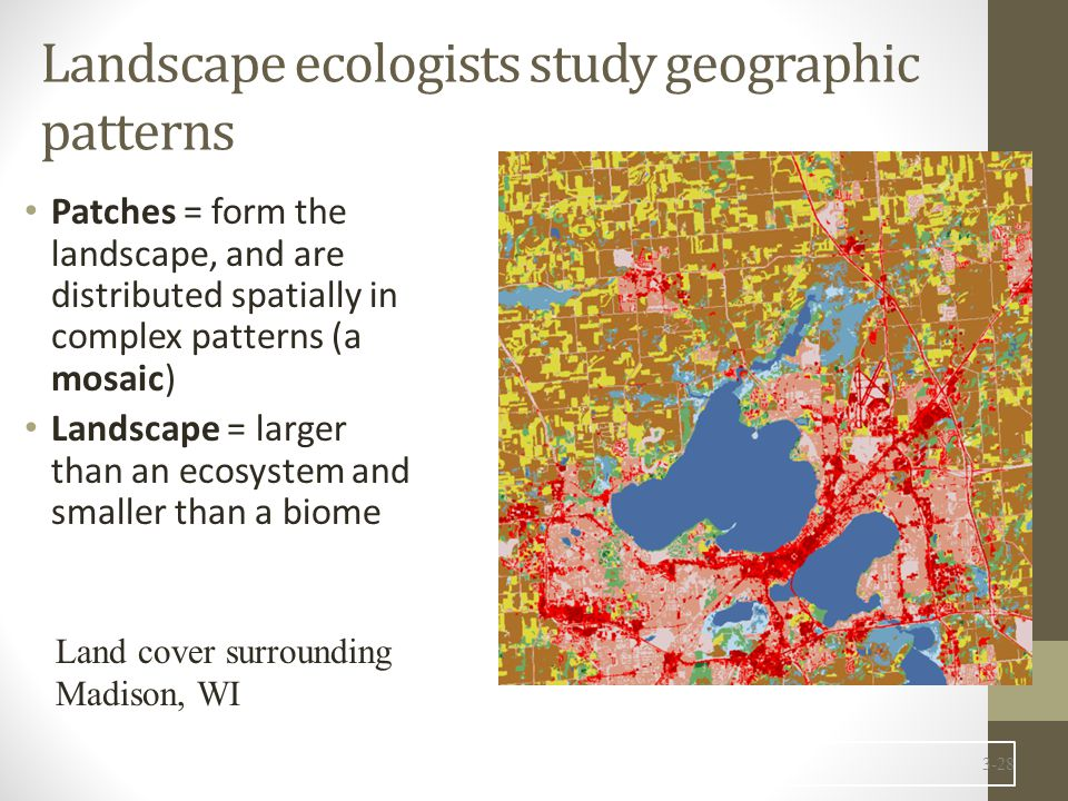 Landscape ecologists study geographic patterns