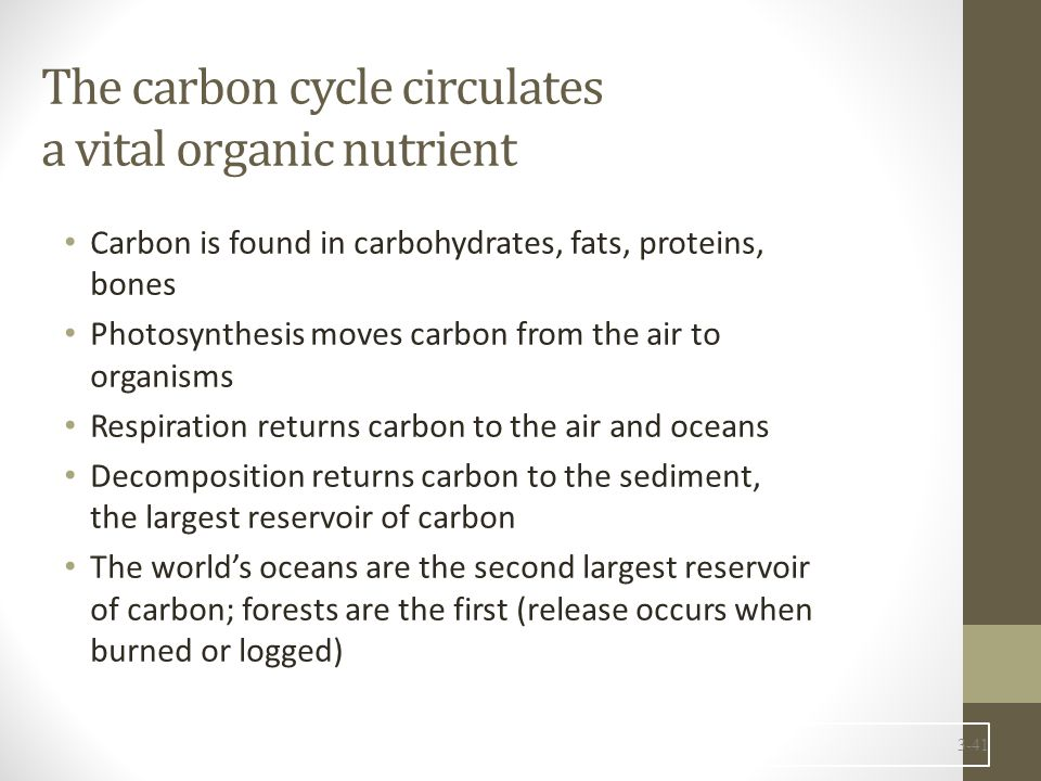 The carbon cycle circulates a vital organic nutrient