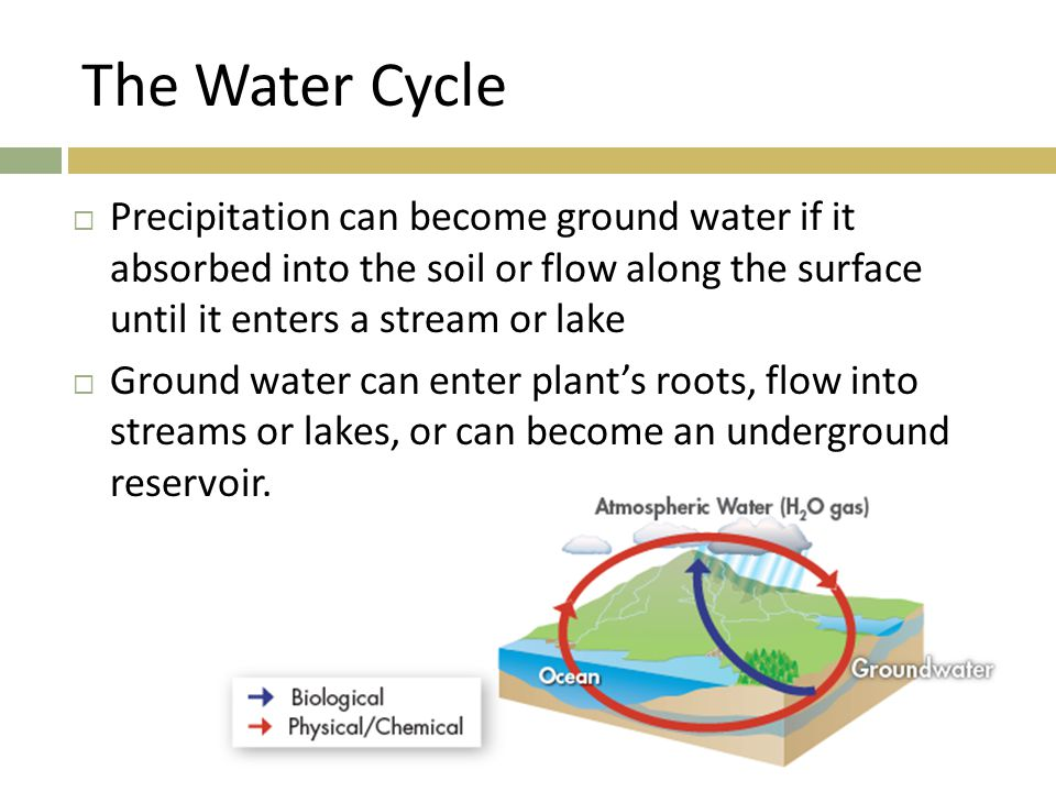 The Water Cycle Precipitation can become ground water if it absorbed into the soil or flow along the surface until it enters a stream or lake.