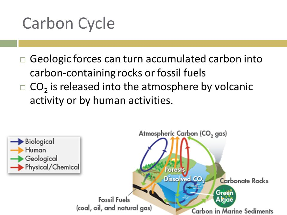Carbon Cycle Geologic forces can turn accumulated carbon into carbon-containing rocks or fossil fuels.