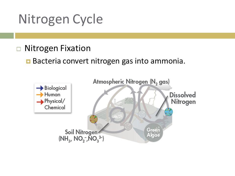 Nitrogen Cycle Nitrogen Fixation