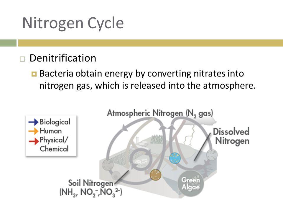 Nitrogen Cycle Denitrification
