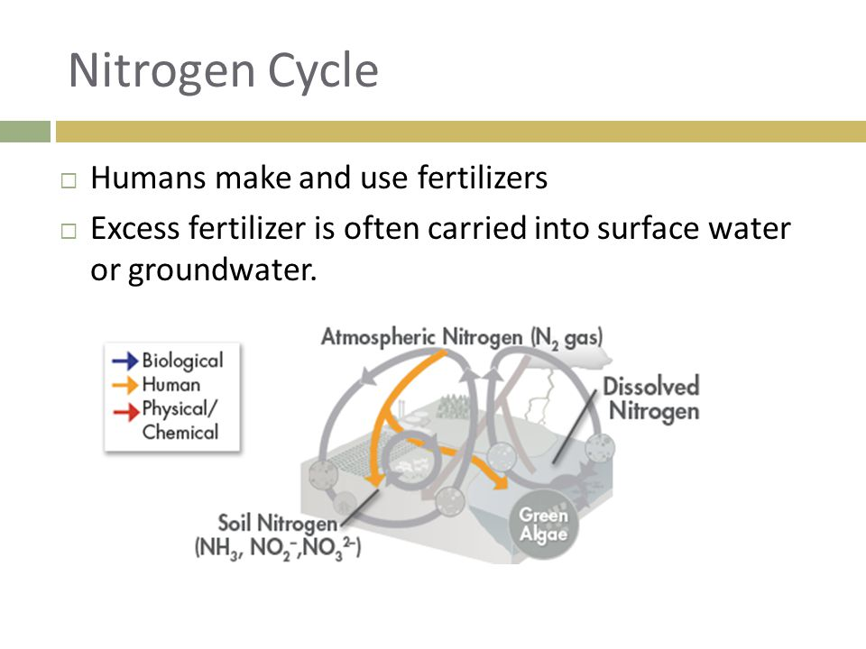 Nitrogen Cycle Humans make and use fertilizers