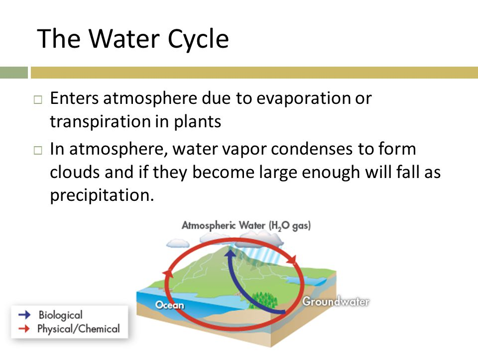 The Water Cycle Enters atmosphere due to evaporation or transpiration in plants.