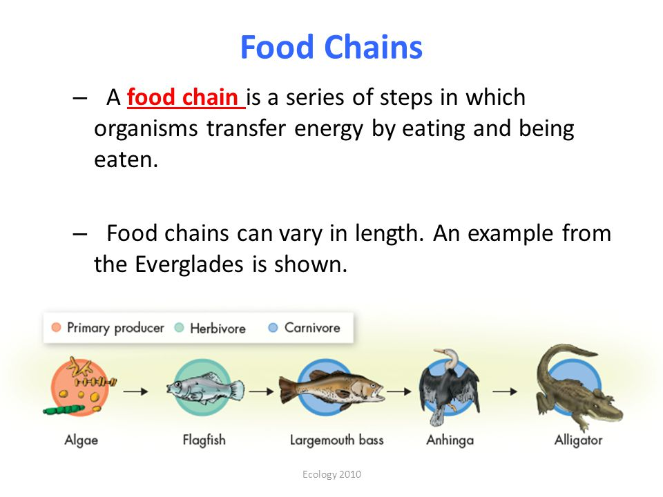 Food Chains A food chain is a series of steps in which organisms transfer energy by eating and being eaten.