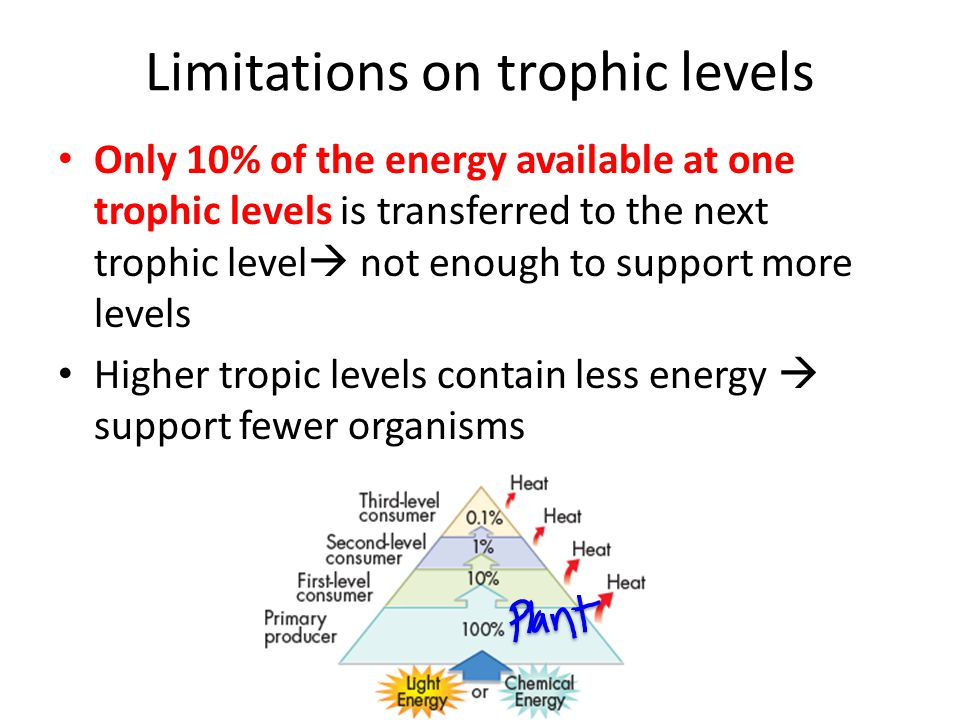 Limitations on trophic levels