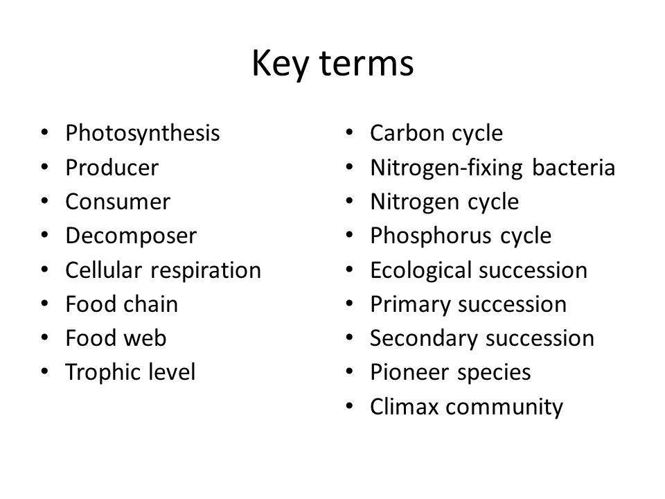 Key terms Photosynthesis Producer Consumer Decomposer