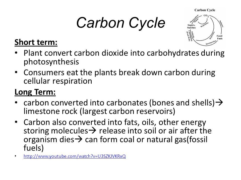 Carbon Cycle Short term: