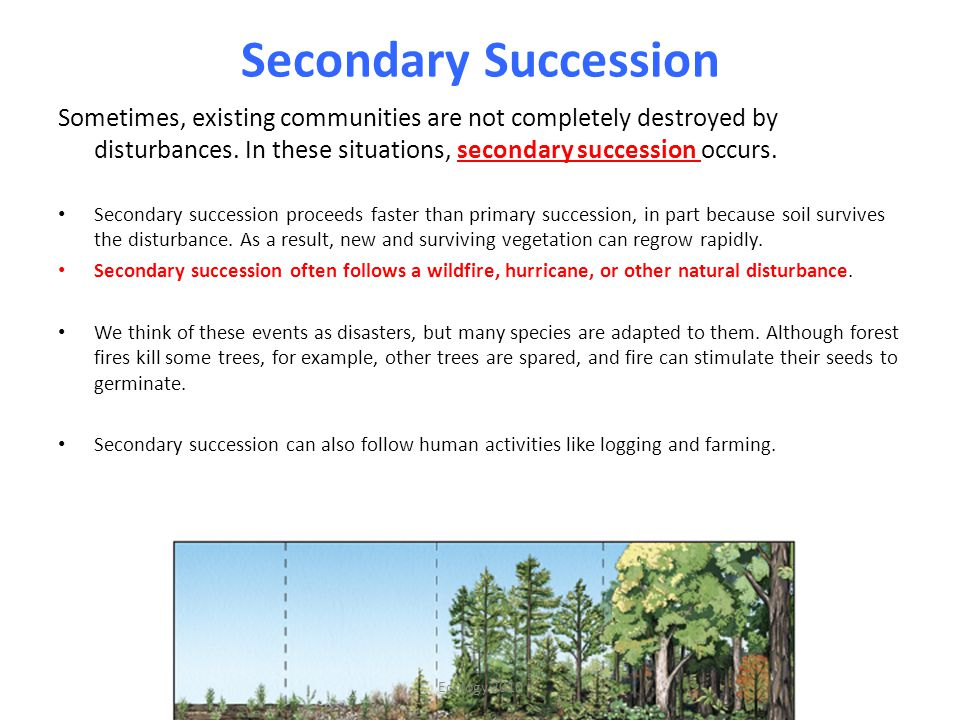 Secondary Succession Sometimes, existing communities are not completely destroyed by disturbances. In these situations, secondary succession occurs.