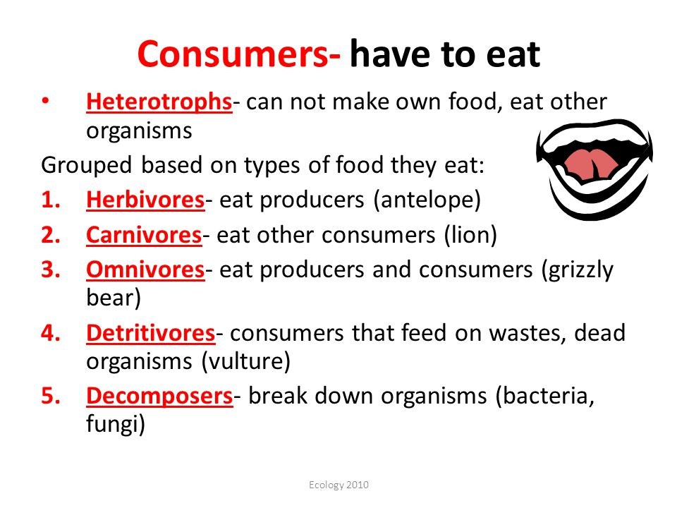 Consumers- have to eat Heterotrophs- can not make own food, eat other organisms. Grouped based on types of food they eat: