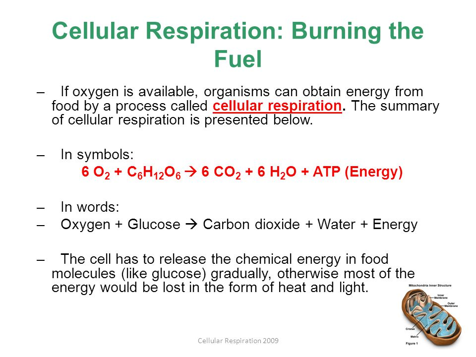 Cellular Respiration: Burning the Fuel