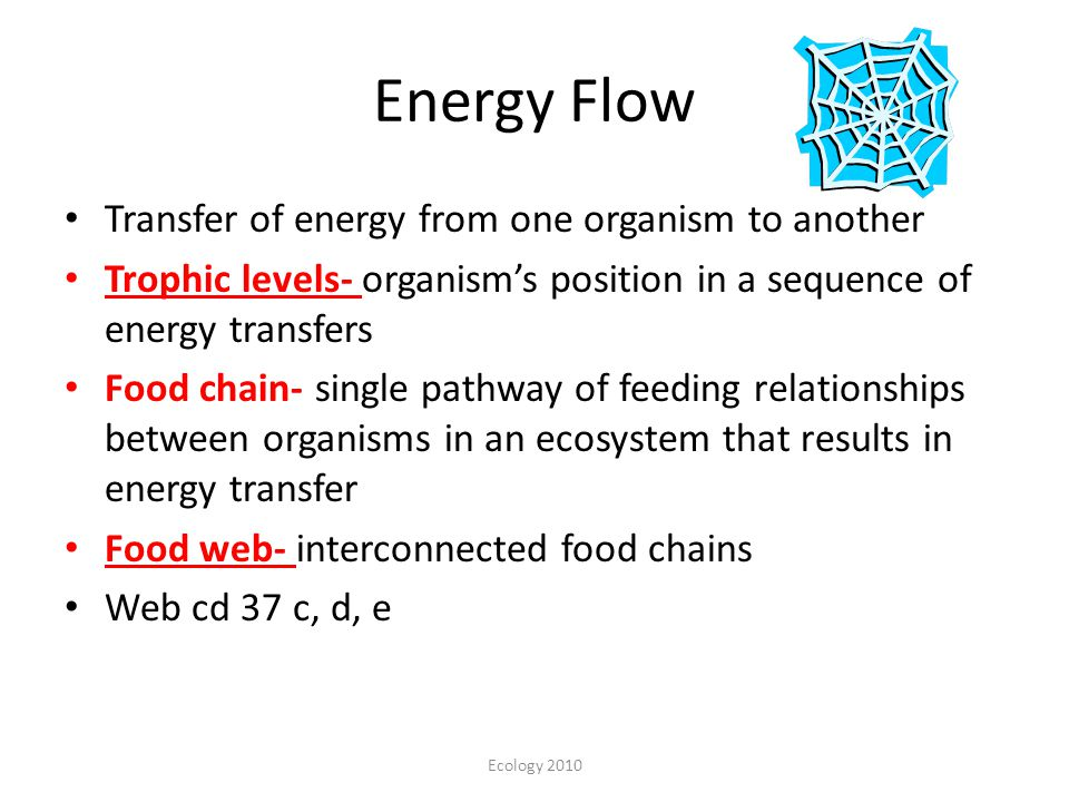 Energy Flow Transfer of energy from one organism to another