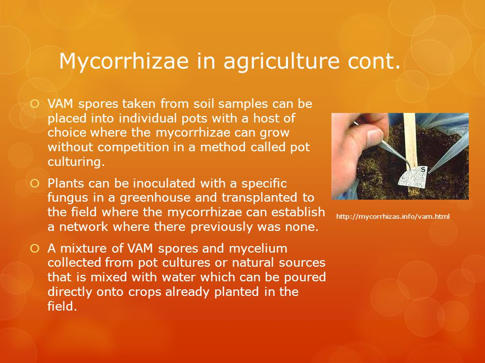 Mycorrhizae in agriculture cont.