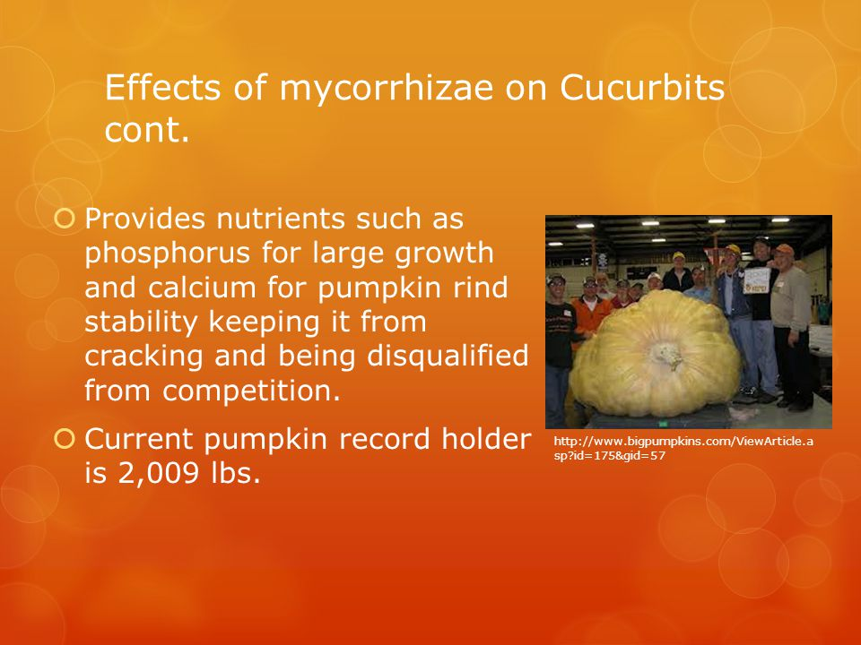 Effects of mycorrhizae on Cucurbits cont.